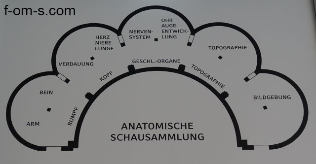 Anatomische Sammlung: Übersichtsplan