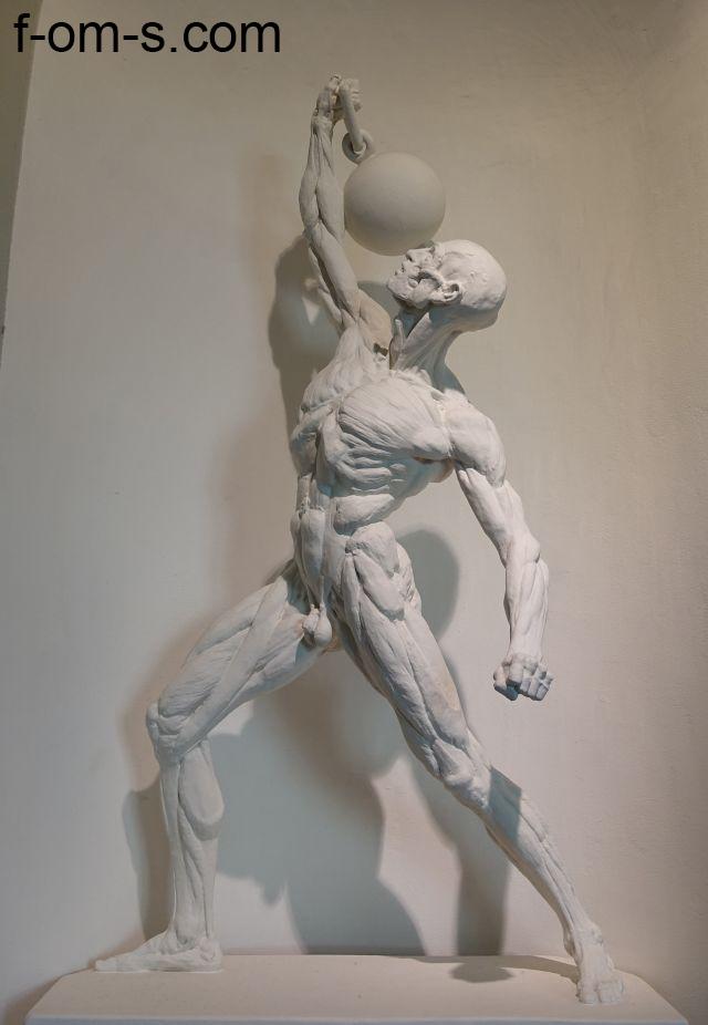 Anatomische Sammlung: Sportler