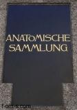Anatomische Sammlung